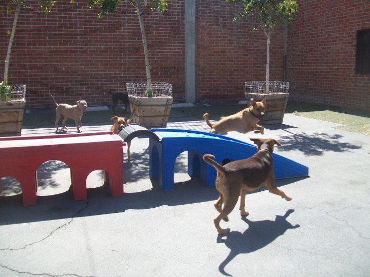 dog-play3