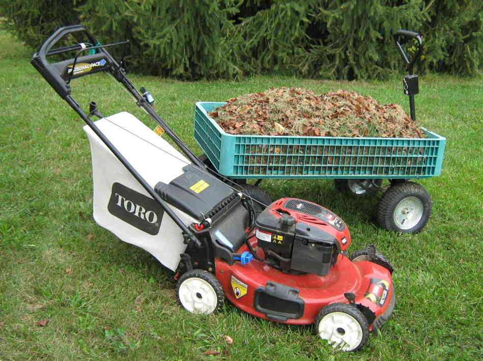 grass-cuttings-for-mulch_61