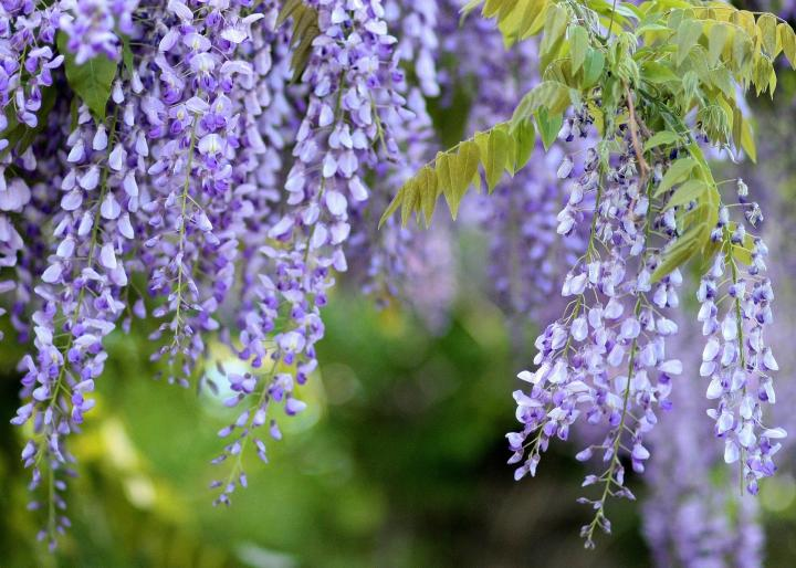What to plant along fences and walls