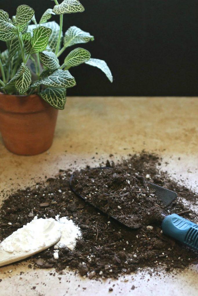 backing soda organic fungicide recipes