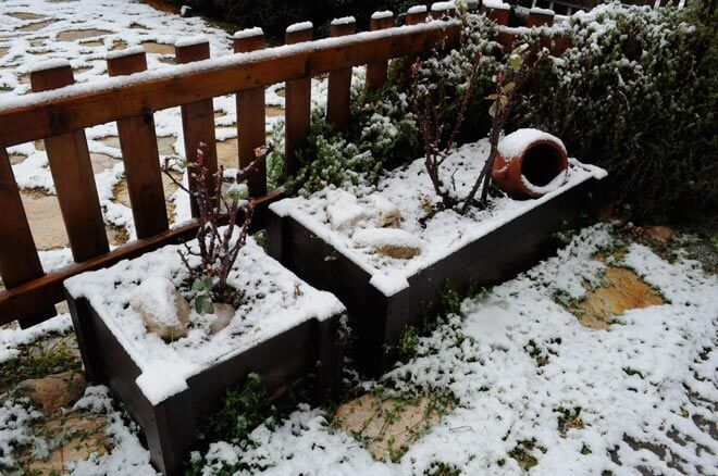 Things to Do in the Garden During Winter