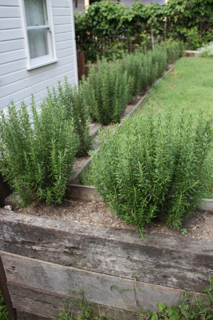 Plants Vs Mosquitoesideas For Garden Backyard And Space