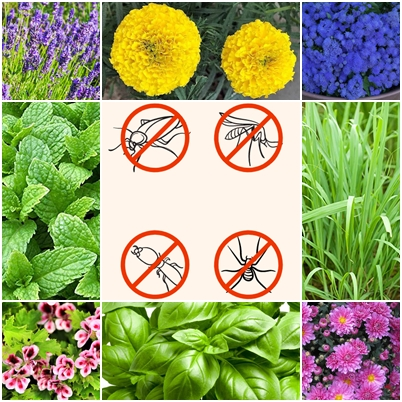 Plants that repel unwanted insects